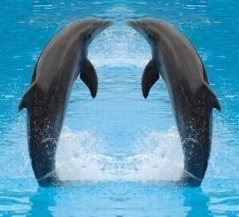 fotobehang art. 70018 Dolfijnen