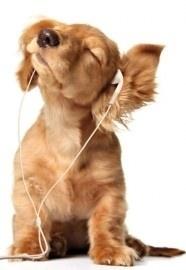 fotobehang art. 70064 Puppy