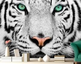 Fotobehang witte tijger