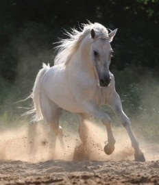 fotobehang art. 70065 Paard