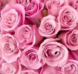 fotobehang art. 70079 Roze rozen