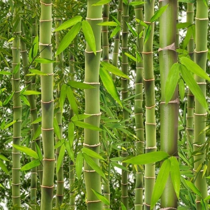 Be Yourself Too behang J415-04 Bamboe