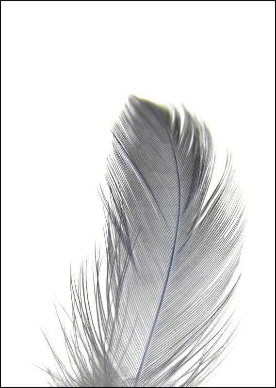 Poster - Veer 1