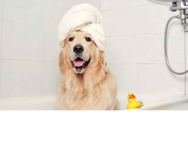Shampoo, Conditioner en geurtjes
