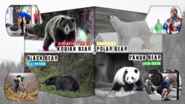 De BearFit beersoorten