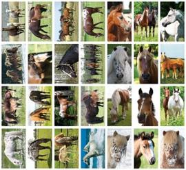 Stickers paarden - serie 126