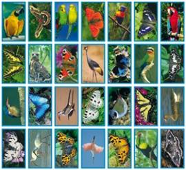 Stickers Vlinders en vogels - serie 35