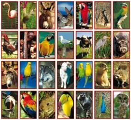 Stickers dieren - serie 28