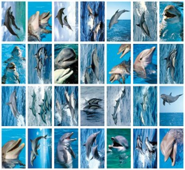Stickers dolfijnen - serie 135
