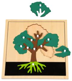 Botanische puzzels - blad-, boom- en bloemstructuur