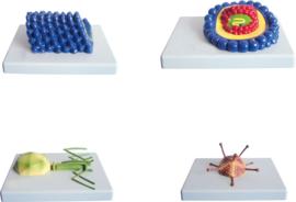 Virussen - modellen