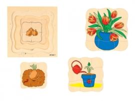 Groeipuzzel de tulp