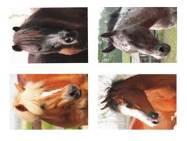 Beloningskaarten paarden