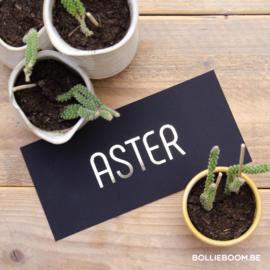 Gouffolie | Aster | 12 februari 2021