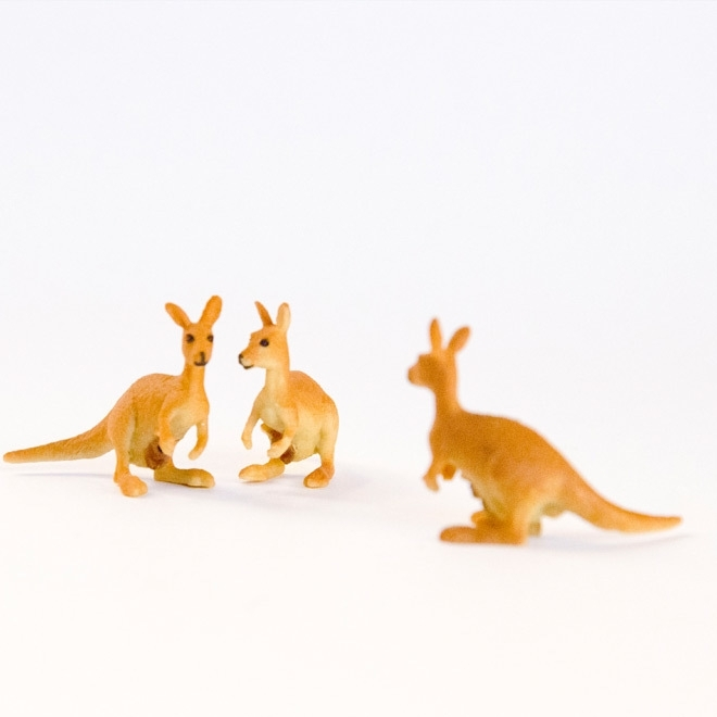 Miniatuur kangaroe