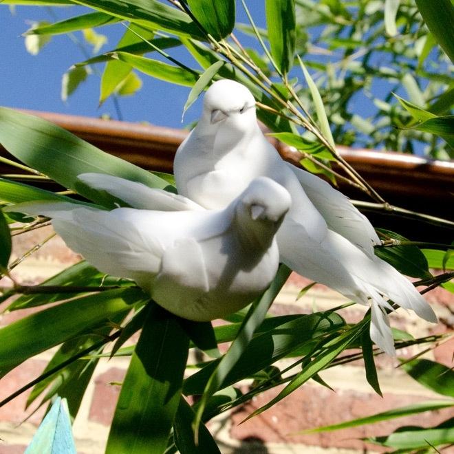 2 witte vogels