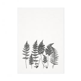Mélisse Prints | Een bosje varens