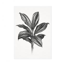 Mélisse Prints | De cordyline