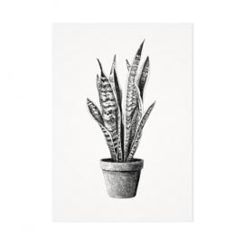 Mélisse Prints | De sanseveria