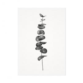 Mélisse Prints | De eucalyptus tak