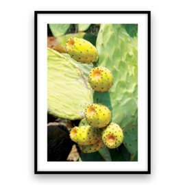 Griekse Cactus