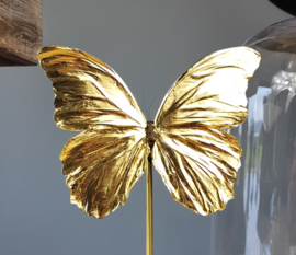 Butterfly Dome with 24ct gold plated Morpho Didius butterfly 32cm RMS04