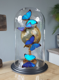 Butterfly Dome with Morpho Menelaus butterflies on Globe 42cm RMS05