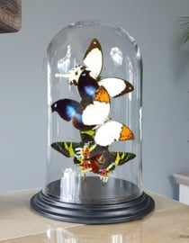 Butterfly Dome with Various butterflies 27cm RMV11