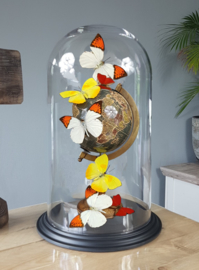 Butterfly Dome with various butterflies on Globe 42cm RMS01