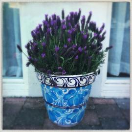Kleurrijke bloempotten XL