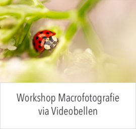 Online Workshop Macrofotografie op ** 2020