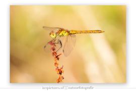 Macrofotografie in de Libellenvallei