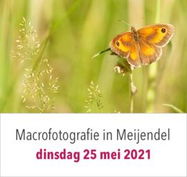 Macrofotografie in Meijendel op dinsdag 25 mei 2021