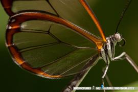 Excursie naar Vlindertuin Harskamp