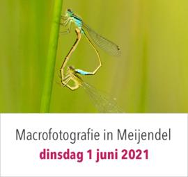 Macrofotografie in Meijendel op dinsdag 1 juni 2021