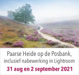 Workshop Paarse Heide op de POSBANK,  inclusief nabewerking in Lightroom dinsdag 31 augustus en donderdag 2 september 2021