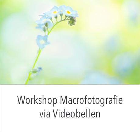 Online Workshop Macrofotografie op donderdag 1 juli 2021 om 19:00 uur