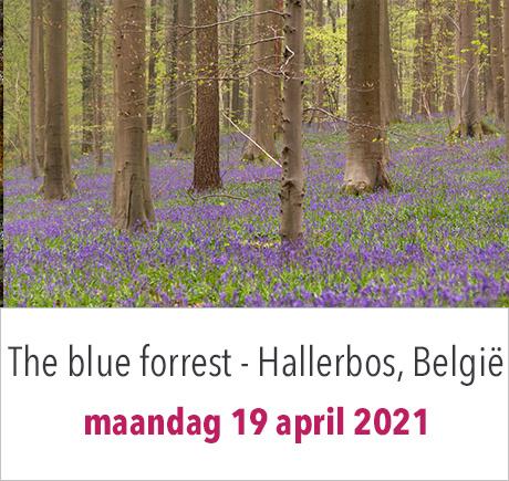 Hallerbos - the blue forrest - in België inclusief beeldbewerkingsavond