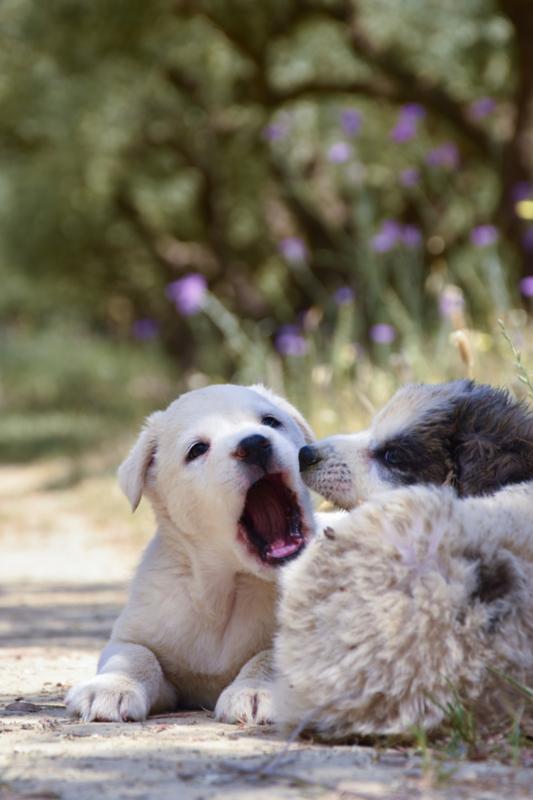 Serie van je huisdier