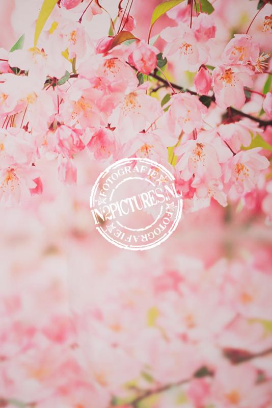Roze lentebloesem
