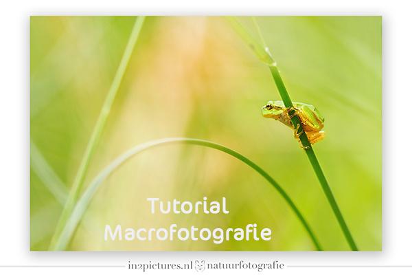 Macrofoto's maken zonder macrolens?? Hoe dan??!!