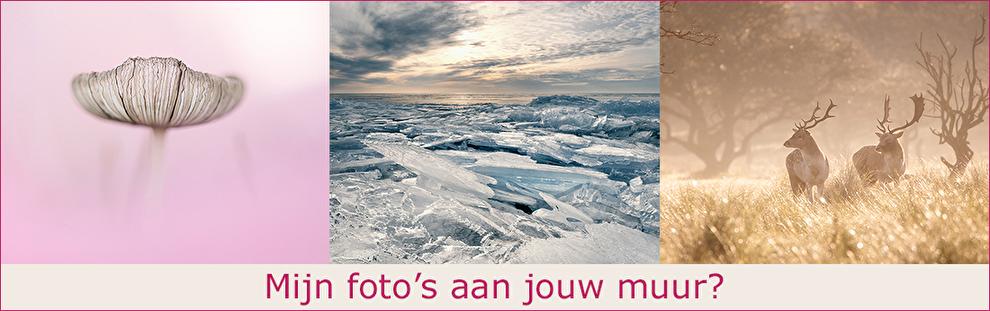 in2pictures.nl fotoschool, fotografie workshops, excursies, beeldbewerking