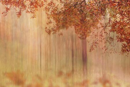 in2pictures.nl fotografie - mijn werk aan de muur - Bosfotografie