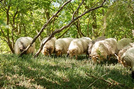 in2pictures.nl fotografie - mijn werk aan de muur - dieren