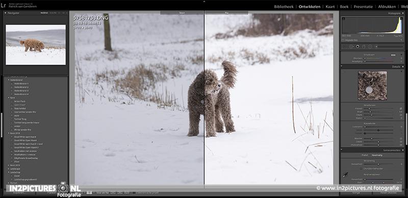 Witte sneeuw fotograferen - tips