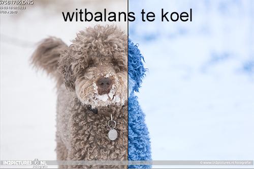 Witbalans te koel - in2pictures.nl fotoschool