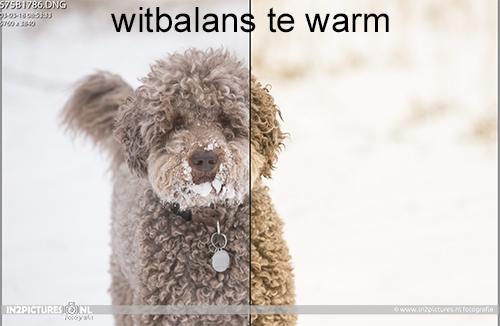 Witbalans te warm - in2pictures.nl fotoschool