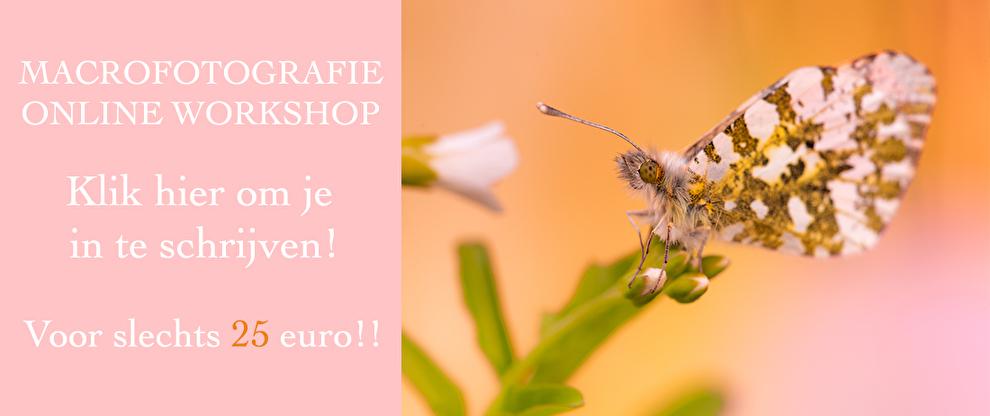 workshop macrofotografie, in2pictures.nl fotografie, online leren