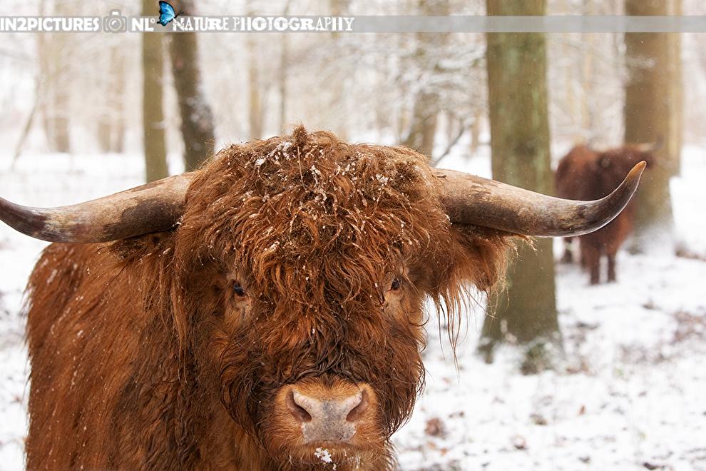 Flitsen in de sneeuw