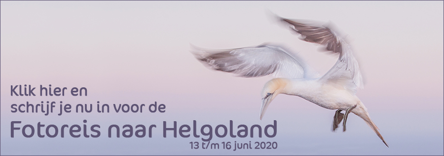 Fotoreis naar Helgoland in het voorjaar met in2pictures.nl fotografie